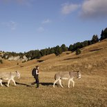Hiking with donkeys on the Vercors highlands