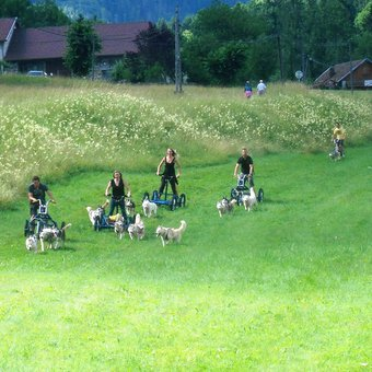 initiation-mushing-cani-kart-belledonne-2.jpg