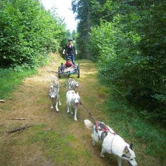 initiation-mushing-cani-kart-belledonne-1.jpg