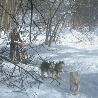 mushing-ados-belledonne-1.jpg
