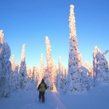 Snowshoeing stay in Finnish Lapland