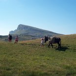 Family roaming hike with donkeys (South Vercors)