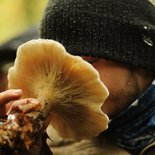 The fabulous world of mushrooms (Vercors)