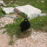 Recognize mountain birds (Savoie, Maurienne)