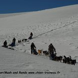 ½ day initiation to sled dogs driving (Vercors)