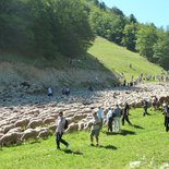 Transhumance celebration in the South Vercors