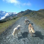 Mountain hike with sled dogs in autumn and spring (Belledonne, Isère)