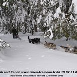 Nature raid by dog sled in Vercors
