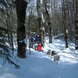 Introduction to mushing during winter in Belledonne Massif (Isère)